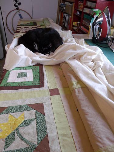 Helper Cat: A photo essay with bonus cat hair