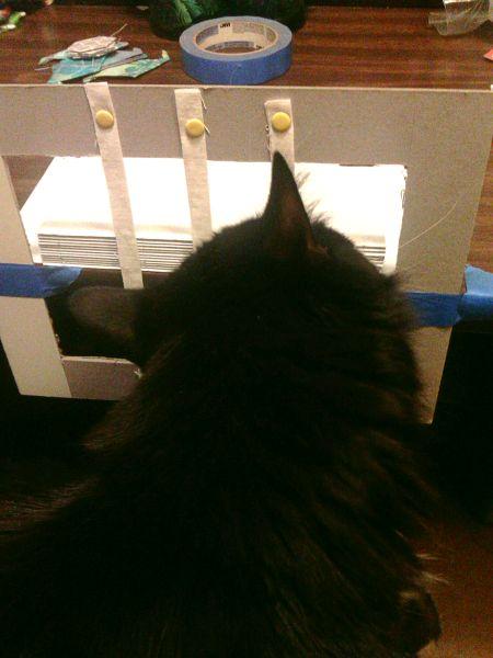 Bookbinder Cat